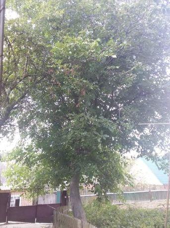 Дерево орех на дрова на мебель самоспил самовывоз