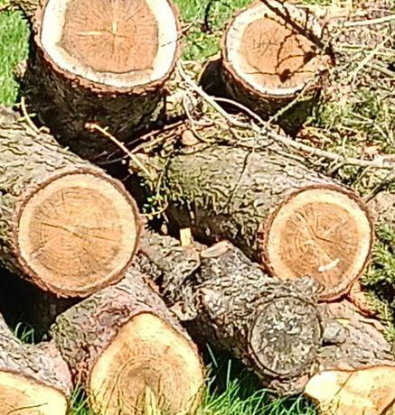 Modrzew tartaczny kłody drewno