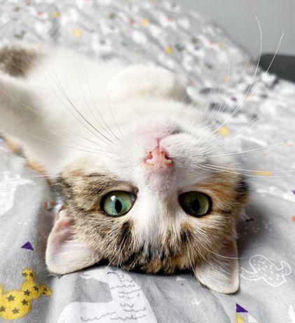 Halo! Tu Asoka, najsłodszy kotek świata!