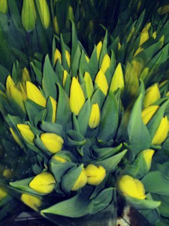 Tulipany Tulipan 8 marca Dzien Kobiet
