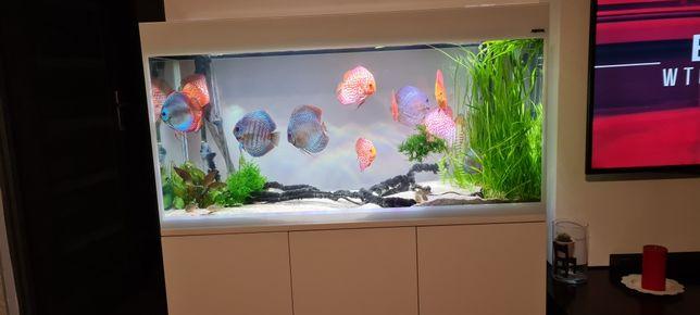 Akwarium Aquael glossy 120
