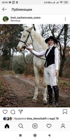 Лошадь конь жеребец