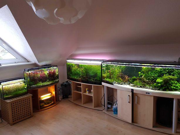 MEGA ZESTAW Roślin Akwariowych + GRATISY + porady