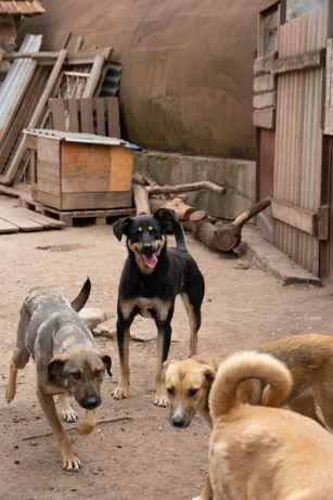 Ищу хозяина для собаки