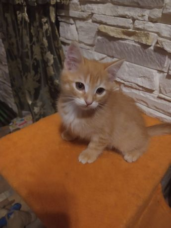 Отдам котенка, кот 2,5 мес.