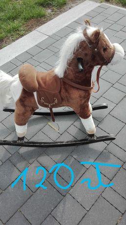 koń na biegunach, miś