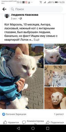 Подарим в хорошую семью  замечательного ангорского кота!