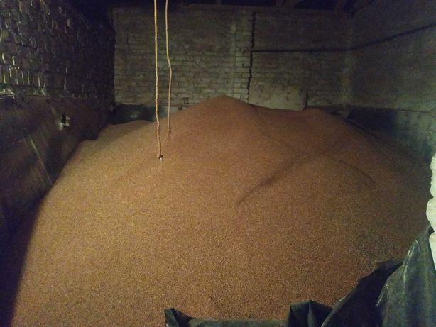 Продам пшеницю сою