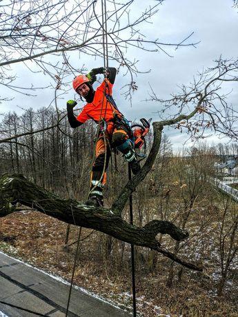 Pielęgnacja & wycinka drzew
