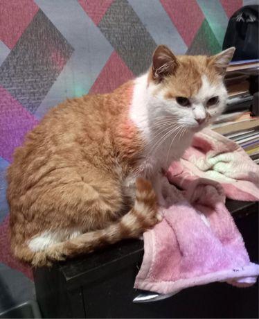 Молодой котик мечтает о доме!!