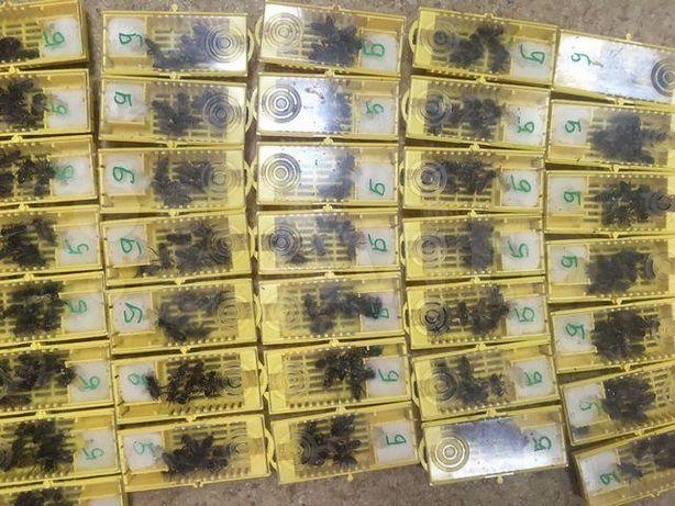 Пчелиные пакеты Украинская степовая С доставкой в Калиновка! Акция!