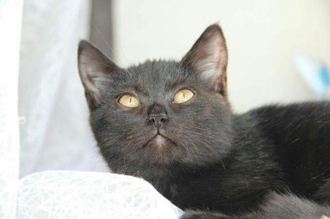 Отдам черную кошку,10 месяцев, стерилизована,привита