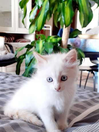 gatinha para adoção