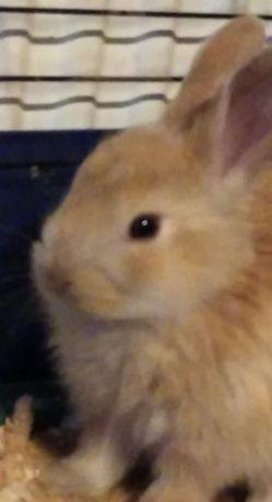 Oddam 3 króliczki