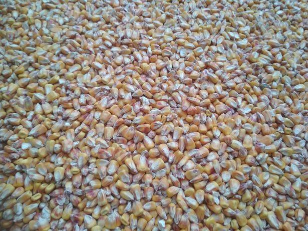 Kukurydza ziarno siewnik 3 m pług 4