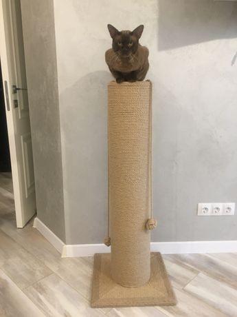 Когтеточка, царапка для котов