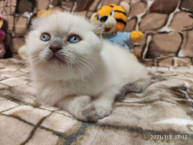 Мальчик фолд с голубыми глазками