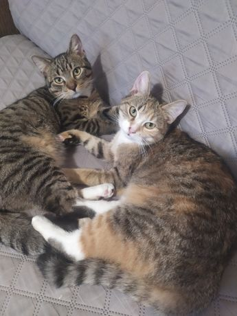 Roczne kot i kotka po kastracji i sterylizacji.Za darmo.