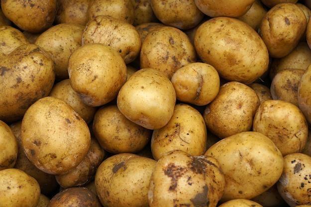Ziemniaki Vineta, August, Lord, czerwone Bellarosa