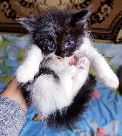 Котенок в хорошие руки бесплатно