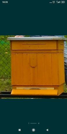Rodziny pszczele,  matki karpatki, ul Wielkopolski
