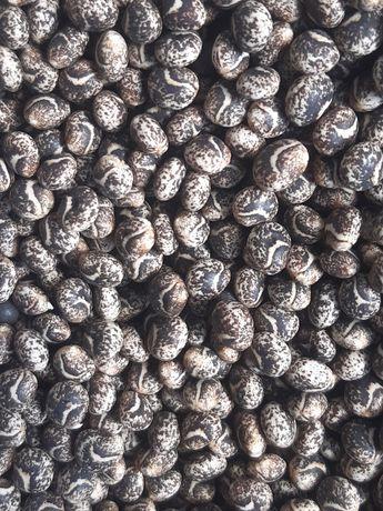 pszenica wilejka,rzodkiew oleista,pszenżyto belcanto,gorczyca,seradela