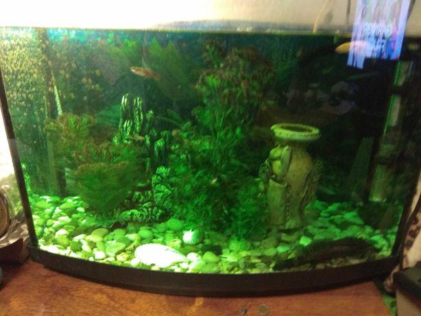 Продам аквариум с крышкой  и светом на 60л и аксессуары