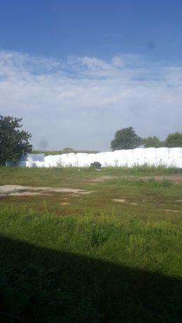 Kiszonka z trawy w belach z łąk polnych 2020