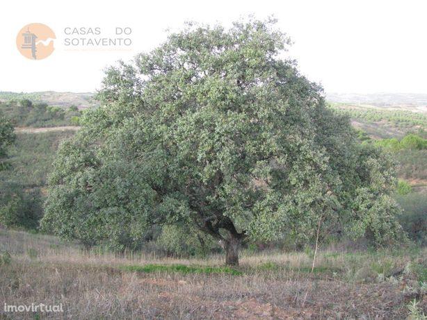 Terreno Rústico Com 4.960 M2 - Com Árvores - Dois Acesso ...
