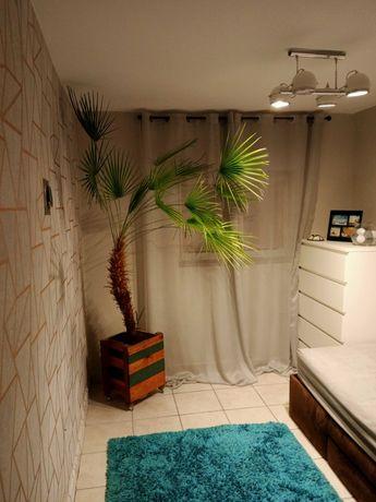 Piękna palma. Jedyna w swoim rodzaju.
