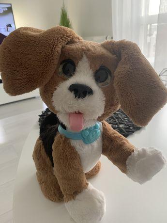 Piesek interaktywny Hasbro FurReal Charlie Rozszczekany Beagle