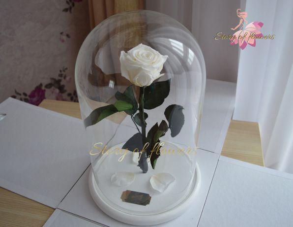 Роза в колбе. Подарок для всех девушек к 8 марта в Одессе!