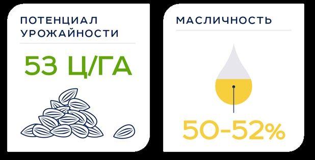 Насіння соняшнику АВАЛОН (NS 6046) потенціал врожайності 53 ц/га