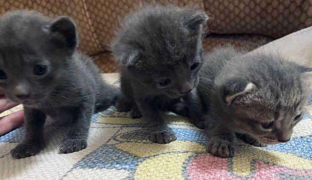 DOAÇÃO gatinhos precisam de um novo lar