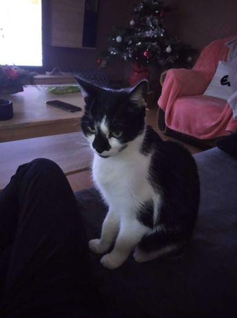 Śliczna kotka Sonia szuka kochającego domku na stałe