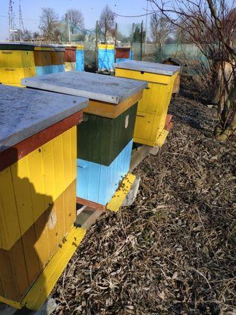 Ule z pszczołami!