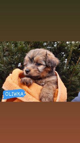 Adoptuj Oliwke :)