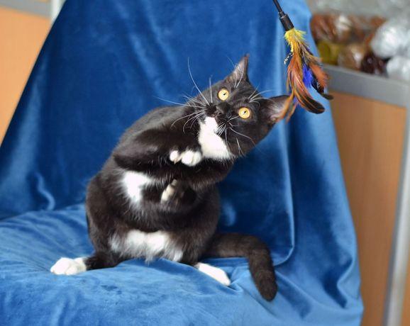 Котик Маркиз (кот, котенок, котик)