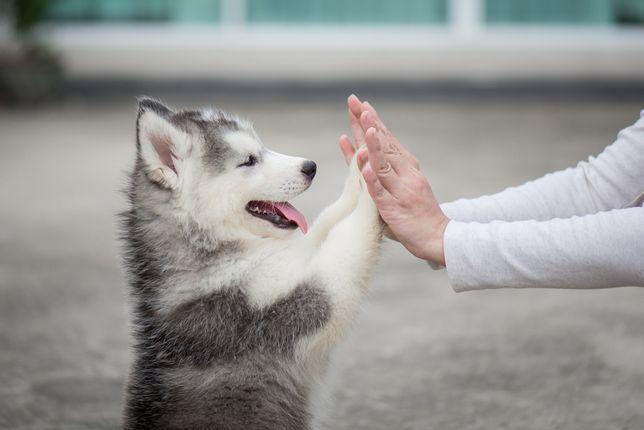 Инструктор по дрессировке собак. Консультации. Кинолог. Выгул собак