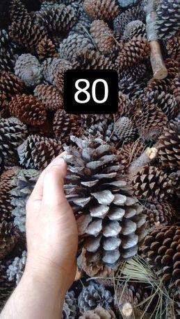 Sacos de 80 ou 50 pinhas