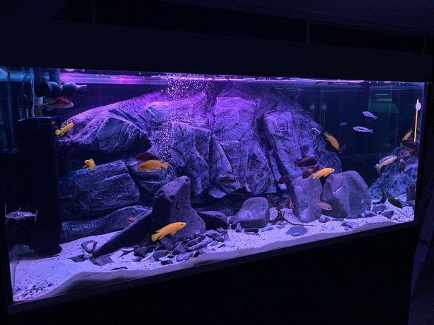 Moduły, tło do akwarium 120x50 150x50