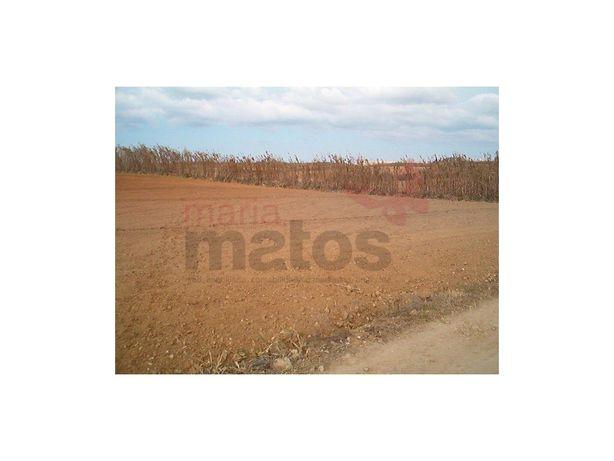 Terreno agrícola com 5.000m2 na Praia da Areia Branca