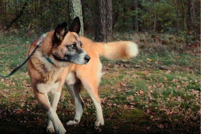 Karat - duży i niewidomy psiak, który lubi towarzystwo człowieka