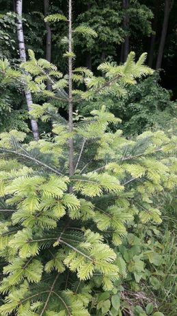Саджанці лісових дерев.