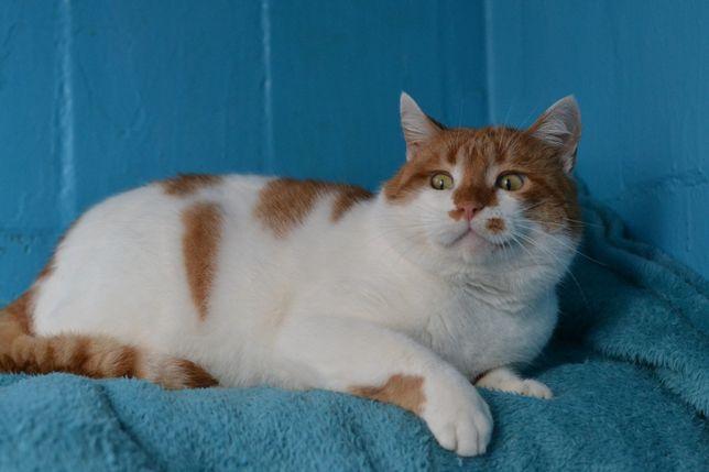 рудо-білий котичок в пошуках домівки 1р