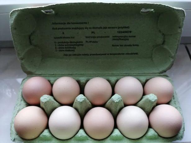 Wiejskie Jajka - ekologiczne jaja z Wolnego wybiegu!