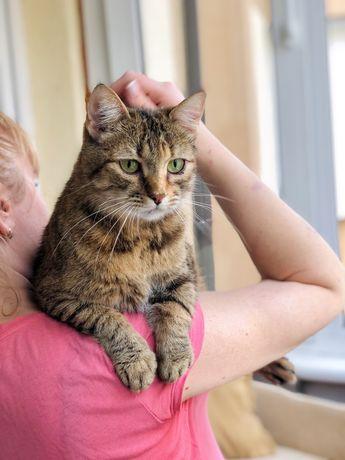 Очень красивая и добрая кошка в поиске дома