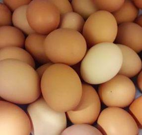 Ovos caseiros