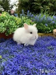 Счастливые мини кролики в продаже по доступным ценам в донецке