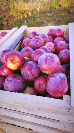 Яблука гарної якості